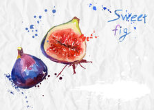 Watercolor illustration. Figs crumpled paper Royalty Free Stock Photos
