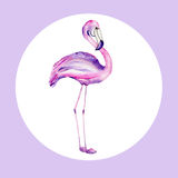 Watercolor illustration of a flamingo Royalty Free Stock Image