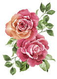 Watercolor illustration flower Royalty Free Stock Images