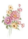 Watercolor illustration Stock Photo