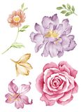 Watercolor illustration  flower. Watercolor illustration flower set in simple white background Stock Photography