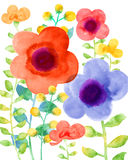 Watercolor illustration flower in simple background Royalty Free Stock Image