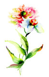 Watercolor illustration of flowers Stock Photography