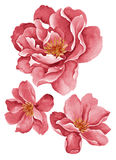 Watercolor illustration flowers Stock Photos