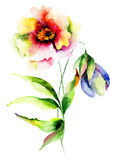 Watercolor illustration of flowers. Watercolor illustration of summer flowers Stock Photo