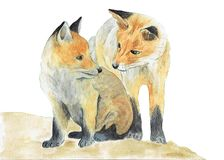 Watercolor illustration foxes isolated on white background. royalty free illustration