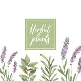 Watercolor illustration. Frame with botanical green leaves, herb. S and branches. Floral Design elements. Perfect for wedding invitations, greeting cards, blogs stock illustration