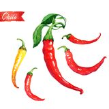 Set of fresh chili peppers isolated on white watercolor illustration Stock Photography