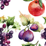 Watercolor Illustration of fruits Stock Image