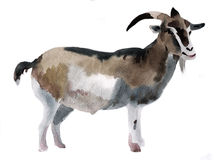 Watercolor illustration of a goat Stock Image