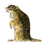 Watercolor illustration of a gopher in white background. Royalty Free Stock Photography