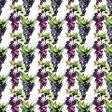 Watercolor illustration with grape cluster Royalty Free Stock Photography