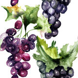 Watercolor illustration with grape cluster Royalty Free Stock Photos