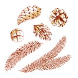 Graphic set of spruce branch and cone. Watercolor illustration. Graphic set of spruce branch and cone isolated on white background Royalty Free Stock Images