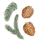 Graphic set of spruce branch and cone Royalty Free Stock Photos