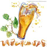 Green branch with fresh beer. oktoberfest background. Watercolor illustration of green branch with fresh beer isolated on white background Royalty Free Stock Photography