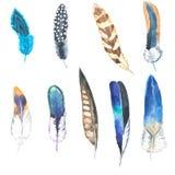 Watercolor illustration. Hand drawn feather set. Boho style. Elements for design. Cloth rug design. vector illustration