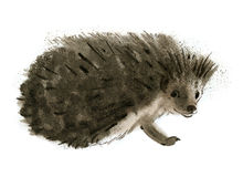 Watercolor illustration of a hedgehog Stock Images