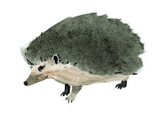 Watercolor illustration of a hedgehog Stock Photo