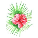 Watercolor illustration of hibiscus flower with palm leaves and fern isolated on white background. Illustration of hibiscus flower with palm leaves and fern Royalty Free Stock Images