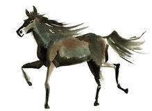 Watercolor illustration of a horse Royalty Free Stock Photos