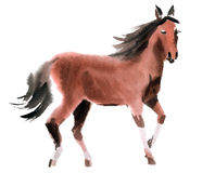 Watercolor illustration of a horse Stock Photos