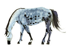 Watercolor illustration of a horse Stock Photography