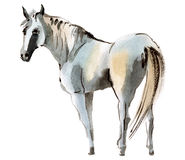 Watercolor illustration of a horse Stock Photo