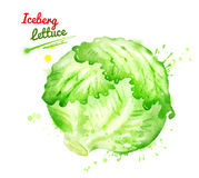 Watercolor illustration of iceberg lettuce. Watercolor illustration of whole iceberg lettuce with paint smudges and splashes Royalty Free Stock Photography