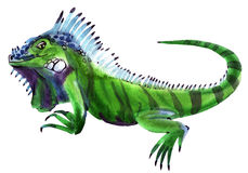Watercolor illustration of iguana in white background. Stock Image