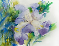 Watercolor illustration iris flower Stock Photo