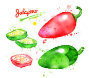 Watercolor illustration of jalapeno pepper. With paint smudges and splashes Royalty Free Stock Photo