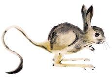 Watercolor illustration of jerboa. Handwork watercolor illustration of jerboa in white background Stock Image