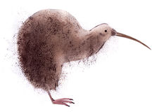 Watercolor illustration of kiwi bird  in white background. Stock Image