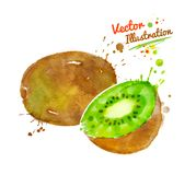 Watercolor illustration of kiwi Royalty Free Stock Photo