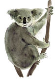 Watercolor illustration of Koala in white background. Stock Photography