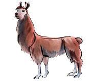 Watercolor illustration of Lama huanachus in white background. Royalty Free Stock Photos