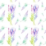 Watercolor illustration of lavender flowers. Isolated on white background. Seamless pattern vector illustration