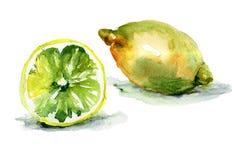 Watercolor illustration of Lemon Royalty Free Stock Photography