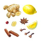 Lemon, giger and winter spices isolated on white watercolor illustration set Royalty Free Stock Photo