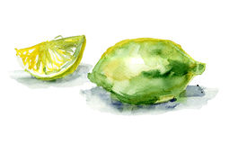 Watercolor illustration of Lemon Stock Image