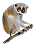 Watercolor illustration of a  lemur Lori in white background. Stock Photography