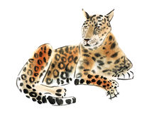 Watercolor illustration of a  leopard in white background. Stock Photography