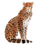 Watercolor illustration of a  leopard in white background. Royalty Free Stock Photo