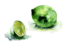 Watercolor illustration of Limes Royalty Free Stock Image