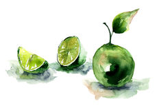 Watercolor illustration of Limes Royalty Free Stock Images
