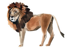 Watercolor illustration of a lion Royalty Free Stock Photos