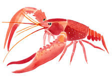 Watercolor illustration of lobster  in white background. Stock Photos