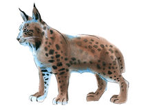 Watercolor illustration of lynx in white background. Royalty Free Stock Photography