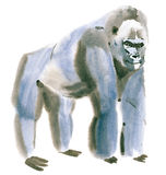 Watercolor illustration of a monkey Royalty Free Stock Image